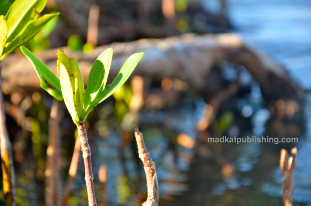 mangroveleaves_mkpublishing